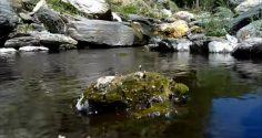 Sonidos relajantes de agua y aves. La naturaleza en estado puro.