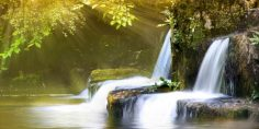 Sonidos naturales y relajantes del bosque en su estado puro.