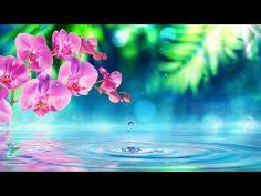 Música Relajante Zen | Música de Relajación y Meditación Profunda | Música para Relajarse y Dormir