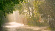 Sonidos relajantes de lluvia para dormir de larga duración.