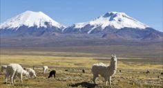 Música de Perú, música instrumental alegre en flauta andina.