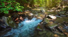 Escuchar música relajante con flauta y sonidos de la naturaleza.