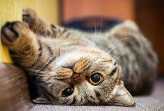 Música para Gatos para Relajarse y Dormir 🐱 Música para Mascotas.