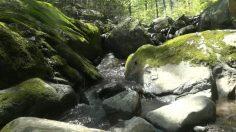 Relajación mental con música tranquila y sonidos de agua.