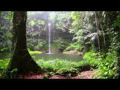 Sonido de lluvia y los animales del bosque ideal para relajarse.