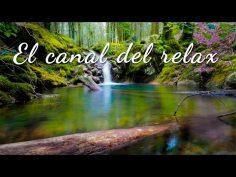 Sonidos relajantes de la naturaleza para calmar la mente.