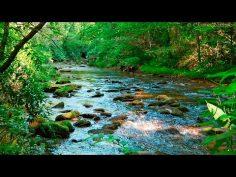 Sonidos del bosque relajantes con agua y animales para calmar la mente.